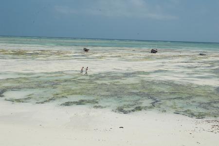 polyps: fisherwomen of polyps, Zanzibar