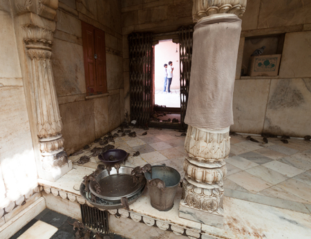 rat temple, Karni mata temple, Deshnoke, India