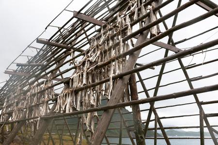 codfish: dried codfish hanging on wooden supports, Lofoten Islands, Norway Stock Photo