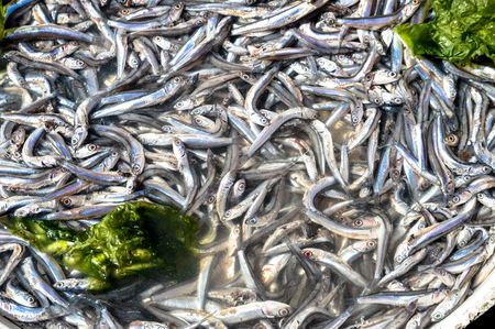 salmonidae: Anchovies in market in Naples, macro picture