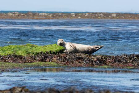 Sea lion in Inishmore, Aran Islands, Ireland