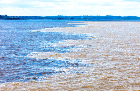Black and  white encounter, Amazon River, Brazil