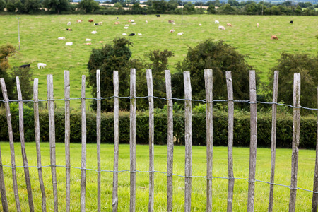 Wooden fence on a green backround in Nwgrange, Ireland