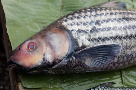 bluefish: Fish exposed in open market Stock Photo