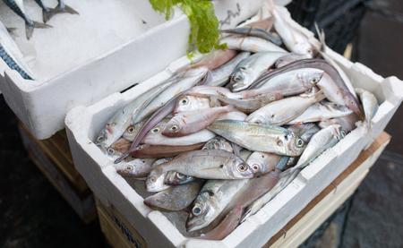 bluefish: Mediterranean fish exposed in open market in Napoli