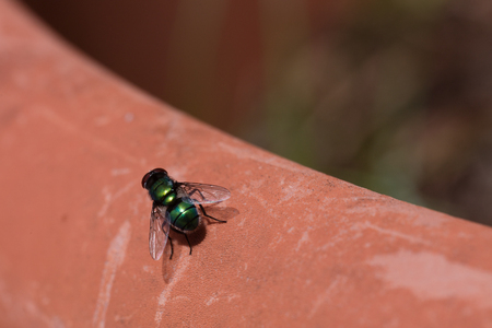 is green: green fly isolated on a brown vase