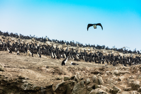 The Ballestas Islands, a reserve full of birds and penguins producing guano