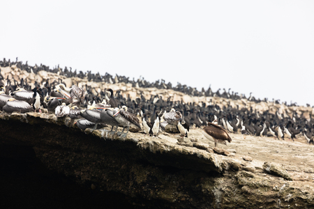 The Ballestas Islands, a reserve full of birds and penguins producing guano Stock Photo - 99436311