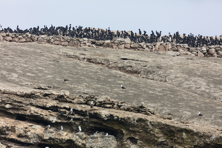 The Ballestas Islands, a reserve full of birds and penguins producing guano Stock Photo - 101107777