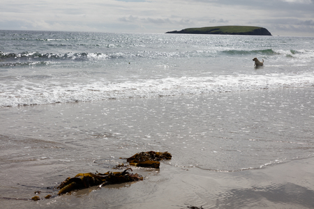 Dog playing in a beach in Ireland. Stockfoto