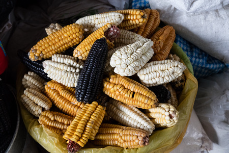 Mix of peruvian native variety of heirloom corns from local market