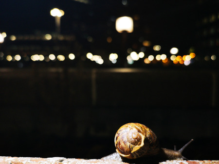 snail on a wall illuminated from behind with a dark background