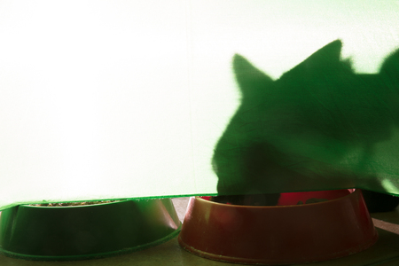 shadow of a cat under a green background with croquettes Standard-Bild - 120865233