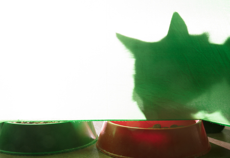 shadow of a cat under a green background with croquettes Foto de archivo - 120865312