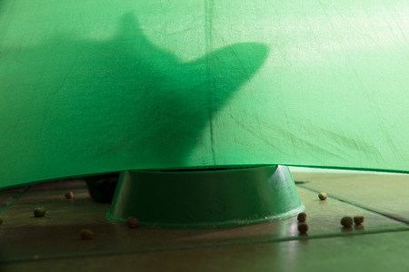 shadow of a cat under a green background with croquettes Foto de archivo - 126064204