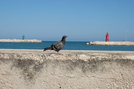 dove with the background of two lighthouses