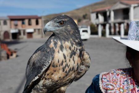 Peruvian woman with hawk, Titicaka lake