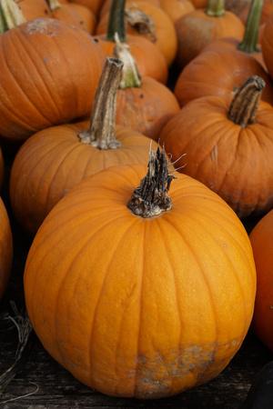 Pumpkins Фото со стока