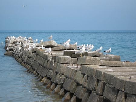 Seagulls on breakwater Фото со стока