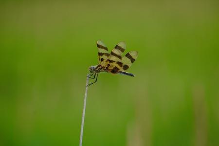 Dragonfly in field