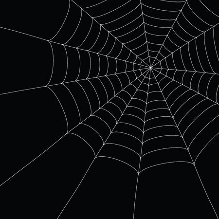 crawlies: white spider web isolated on the  black background