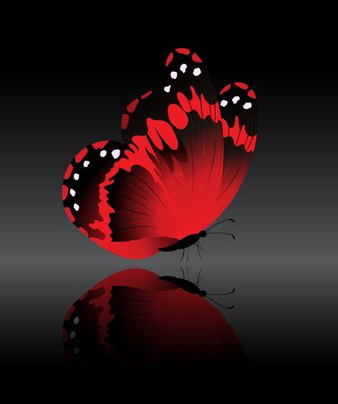 The bright-red butterfly on a black background