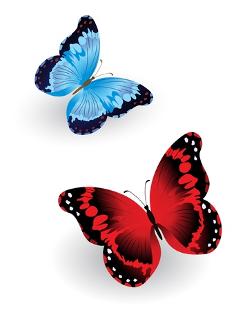 Bright blue and red butterfly isolated on white background Vector
