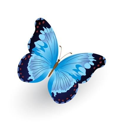 butterfly wings: Bright blue butterfly isolated on white background