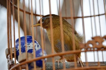 caged: Caged bird