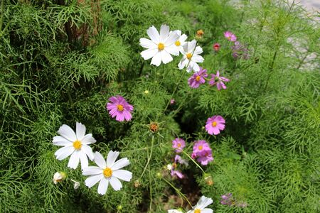 plateau of flowers: Gesang