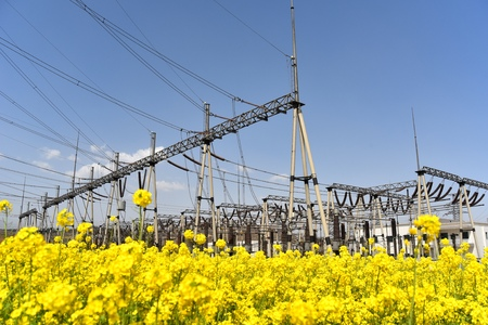 substation: Spring canola fields outside the substation Stock Photo