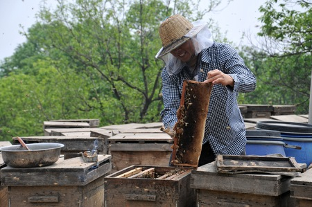 beekeeper: Beekeeper working