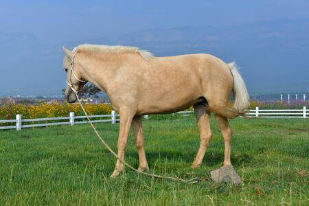 herbivorous animals: Pasture horses