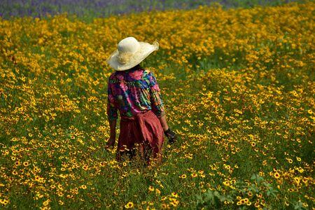 obrero: el cultivo de la nieve del crisantemo Foto de archivo