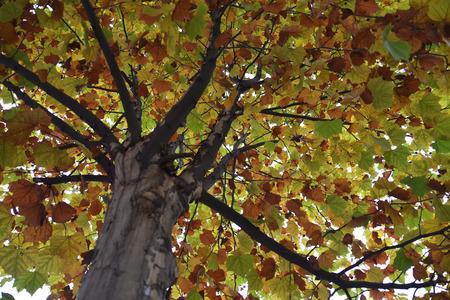 shu: Close up to a tree