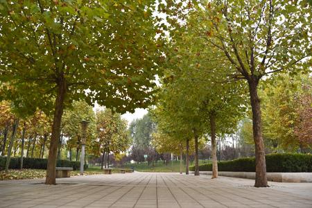 vegetation: Vegetation the Park trees