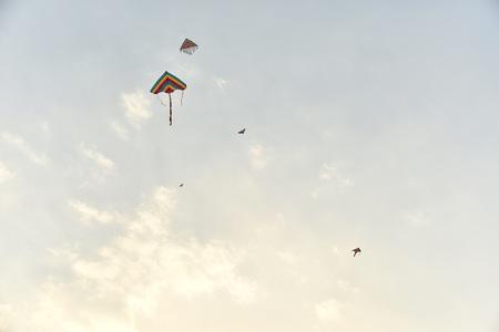 paper kites: The kites in the sky