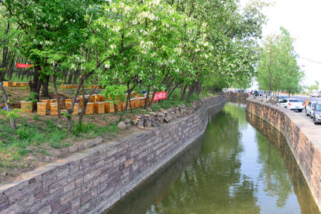apiculture: The canal shore apiculture