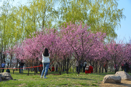The spring scenery and visitors in the city park Stock Photo