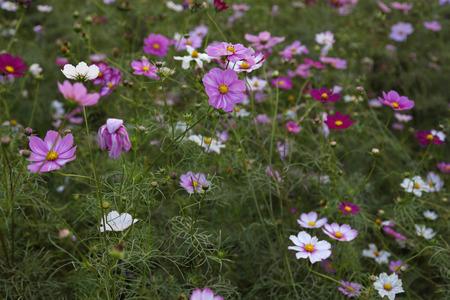 Flowers in a bush
