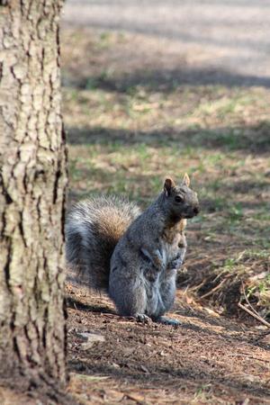 close up: Close up squirrel