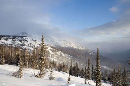 Alpine slope with pine tree covered snow Stock Photo - 2568017