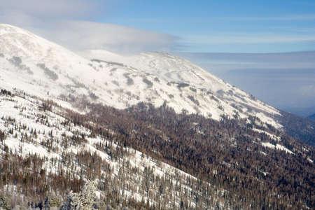 Alpine slope with pine tree covered snow Stock Photo - 2568026
