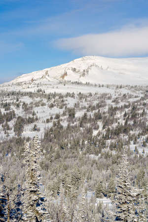 Alpine slope with pine tree covered snow photo