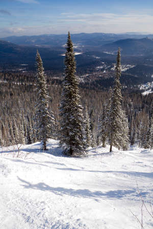 Slope with pine tree covered snow for freeride skiing and snowboarding photo