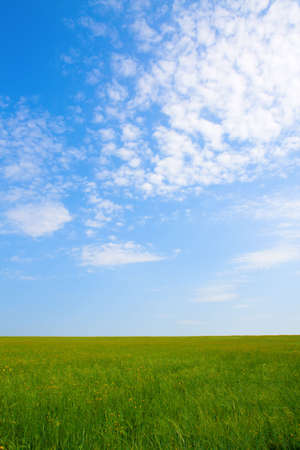 Green field and blue sky for background Stock Photo - 3500645