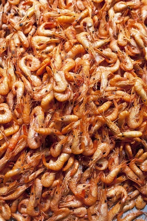 shrimps Stock Photo - 11582483