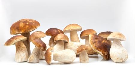 white fund: several fungi on white fund