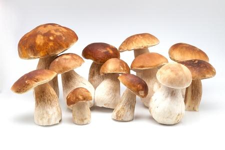 white fund: fungi photographed on white fund
