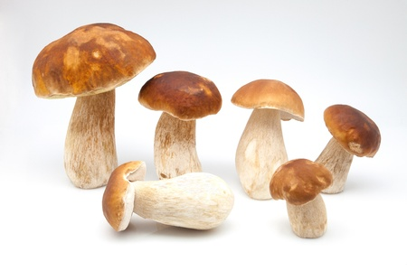 white fund: eatable mushrooms on white fund Stock Photo